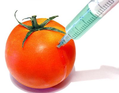 Genetska modifikacija je široko rasprostranjena i obuhvaća veliki dio naše prehrane.