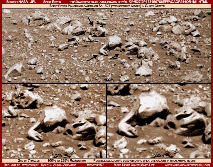 Здраво марсовци 2-157-eel-creature