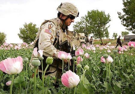 Američka vojska čuva polja maka  te prodaje opijate iz Afganistana. Rat je profitabilan biznis za SAD.