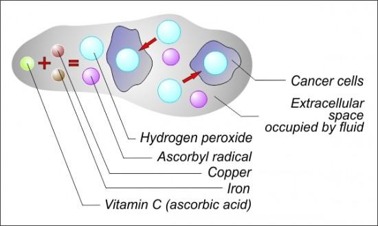 Uništavanje stanica raka uz pomoć vitamina C što izaziva reakciju u vidu hidrogen peroksida što na kraju izaziva apoptozu - staničnu smrt tumorskih stanica.