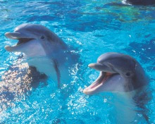 a_2-dolphins-766809