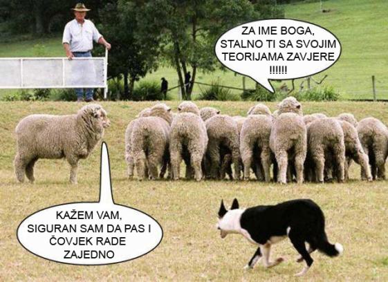 Shheple - ljudi ovce - tako nas vidi patokracija i tako se prema nama odnose.