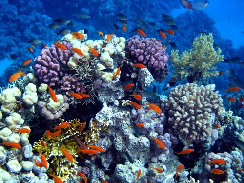 NA ODMOR ! 1-koraljni-grebeni