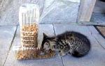 Hranilicu za vašu mačku možete napraviti od kombinacije dvije plastične flaše.