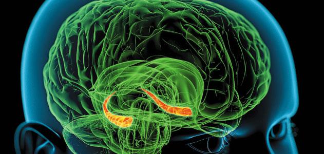1 mozak i hipokampus