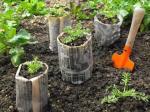 Male biljke možete do rasađivanja uzgajati i u novinskom papiru