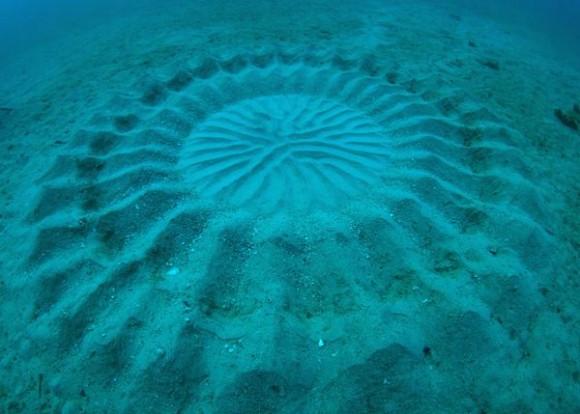 """Misteriozni pješčani krugovi su na internetu dobili ime """"podmorski krugovi u žitu."""""""