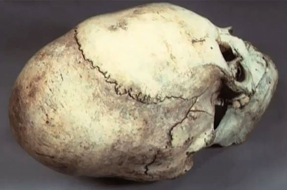 The lack of seam on the pumice skull of Puma Punkia can not be explained by the artificial shaping of the skull.