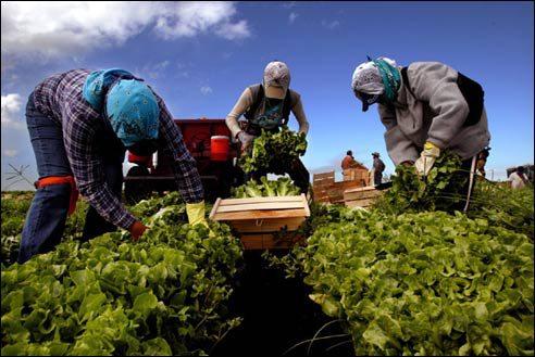 Masovna industrijska poljoprivredna postrojenja polako ali sigurno uništavaju male farmere i organske proizvođače.