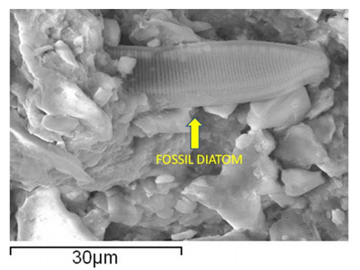 Primjer fosilizirane alge nezemaljskog podrijetla.