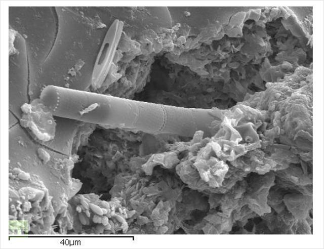 Nepoznata struktura diatoma.