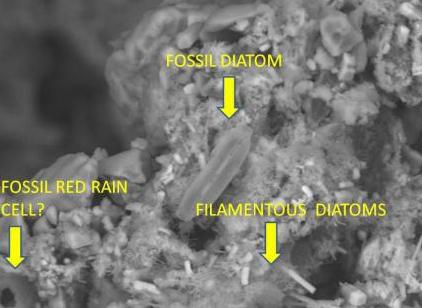 Razlike u diatomima i fosiliziranoj kiši.