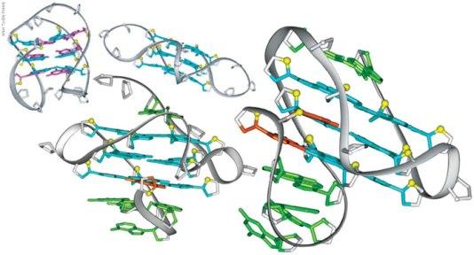 G kvadripleks struktura DNK nastala in vitro.