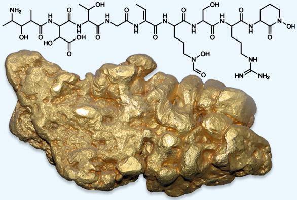 Komplicirana molekula delfibaktina omogućava stvaranje grumena čistog zlata iz zlatnih iona topljivih u vodi.