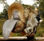 Evo vam jedan žirafin poljubac!