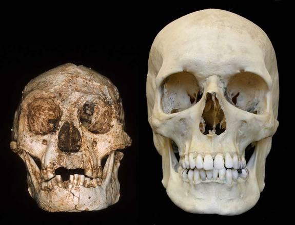 hobbit-skull
