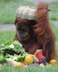 Zašto li su stavili hranu u šešir, nije mi jasno?