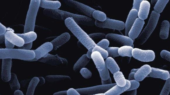 LactobacillusJonsoniiF