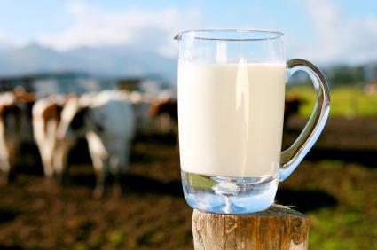 Ukoliko ipak konzumirate kravlje mlijeko, onda je jedini izbor svježe, sirovo mlijeko krava koje su organski hranjene.