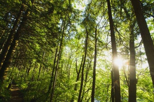 Znanstvenici shvatili kako drveće zove u pomoć