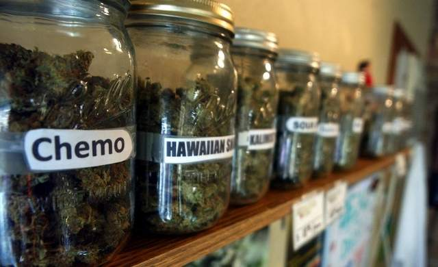 Hoćemo li doživjeti da se marihuana može legalno kupiti za medicinske svrhe?