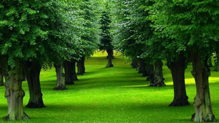 Drveća su vrlo brbljiva između sebe, no nova istraživanja otkrivaju da ona komuniciraju i s nama, ili barem pokušavaju komunicirati.