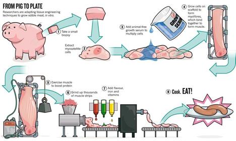 Osim govedine znanstvenici su uspjeli napraviti i uzgojeno in vitro meso od svinje.