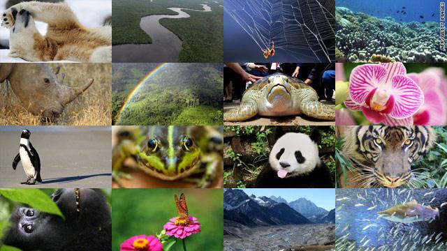 t1larg_biodiversity_montage_gi_fullset