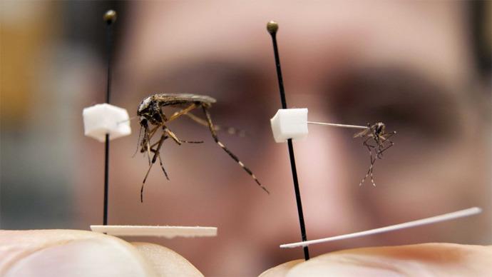 Mega komarci su dvadeset puta veći od običnih komaraca.