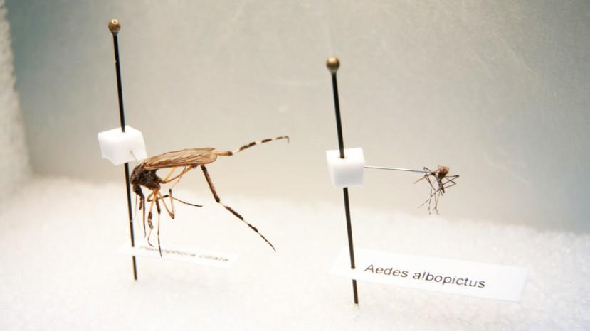 Čudovišni komarci iz Floride ponovno u napadu.