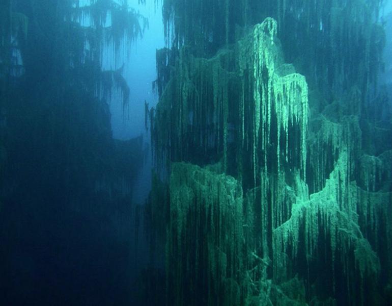 Podvodna šuma jezera Kaindy.