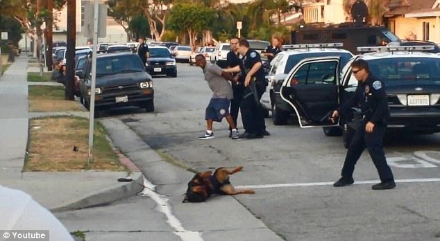 Nakon ubijanja nevine životinje, njen vlasnik je uhićen jer, su se slučajno našli u blizini policijske patrole.
