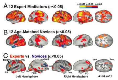 Promjene u mozgu praktikanata meditacije su najviše uočljive u ljudi koji svakodnevno meditiraju više od 12 godina, no svaka meditacija čak i kod početnika stvara pozitivne psihosomatske promjene.