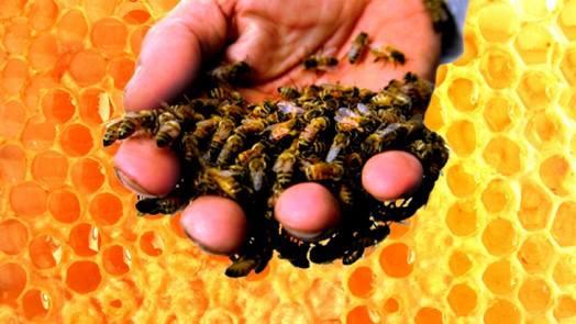Apitoksinoterapija, liječenje pčelinjim otrovom se odavno koristi za tretiranje niza bolesti i stanja poput reume, artroze i artritisa, upale živaca, multiple skleroze i parkinsonove bolesti,   cerebralne paralize, kod visokog tlaka, povišenog kolesterola,  slabe cirkulacije i upale krvnih žila, za liječenje astme i alergija te mnogih drugih pojava.