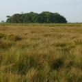 Brda amazonije nekadašnji otoci