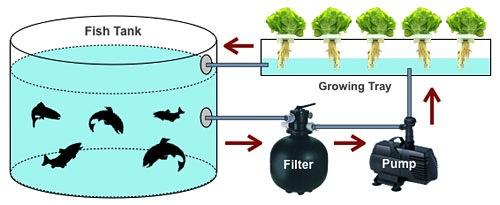 Istodoban uzgoj ribe i povrća pomoću cirkulirajuće vode.