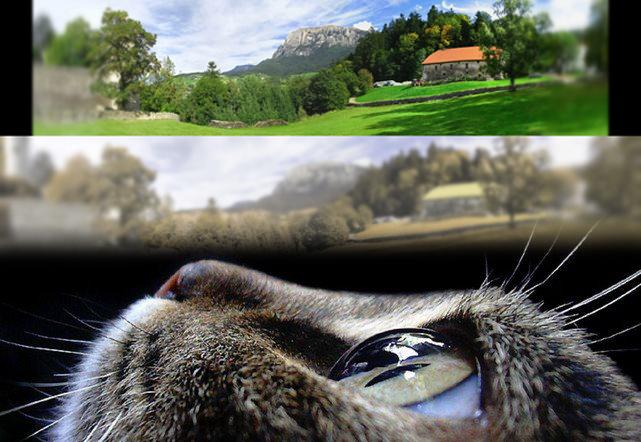 """O načinu na koji mačke vide svijet oko sebe se dosta pisalo i istraživalo, no najnovije kompjuterske ilustracije nam omogućavaju pogled iz """"mačje perspektive."""""""