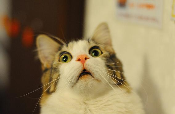 Mačke se najčešće prestraše od životinja koje su napravile nagli pokret. Razlog za takvu reakciju je što spore kretnje mačke uopće ne vide.