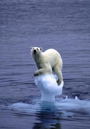 Ikona globalnog zatopljenja, polarni bijeli medvjed na santi koja se topi.