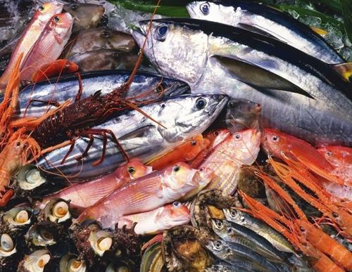 Uz omega-3 masne kiseline, riba je bogata proteinima, vitaminima i mineralima. Problem može nastati jer su mnoge ribe zasićene toksinima poput žive i BPA. Kako bi se to uzbjeglo, stručnjaci predlažu sigurniju konzumaciju onih riba koje su niže u hranidbenom lancu, dakle onih koje se hrane biljem, a ne drugim ribama, kako bi se smanjila kontaminacija.