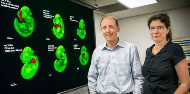 """Profesor Alex Visell, voditelj nedavno objavljene studije koja nam je otkrila iznenađujuću važnost navonde """"otpadne DNK,"""" usudili bi se reći da priroda ne stvara smeće, a naročito ne u našim genima."""