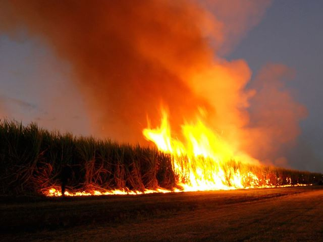 Mađarska je zabranila GMO sjemnje i sva polja zasijana GMO-ima je zapalila.