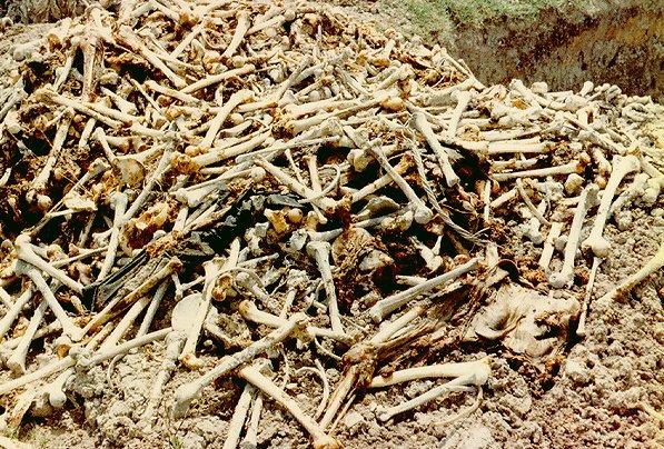Polja smrti su još uvijek prepuna kosti žrtava Crvenih Kmera u Kambodži.