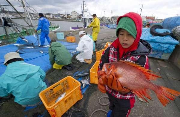 Japanska ribu iz Pacifika i dalje love i jedu, te je nesmetano izvoze diljem svijeta.