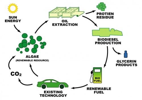 Uzgoj algi za proizvodnju bio-goriva čini zatvoreni, iskoristivi krug.
