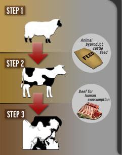 Kravlje ludilo ili goveđa spongiformna encefalopatija (GSE) je smrtonosna neurodegenerativna bolest goveda. Pojavila se još prije 60-tak godina u Velikoj Britaniji, kao rezultat prehrane goveda koštanim brašnom nastalim od strvina zaraženih ovaca. U varijanti Creutzfeldt-Jakobove bolesti (vCJB) pojavljuje se i kod ljudi zbog prehrane kontaminiranim goveđim dijelovima.