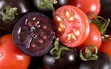 Ljubičasta rajčica – podvaljivanje GM ploda pod krinkom zdrave hrane