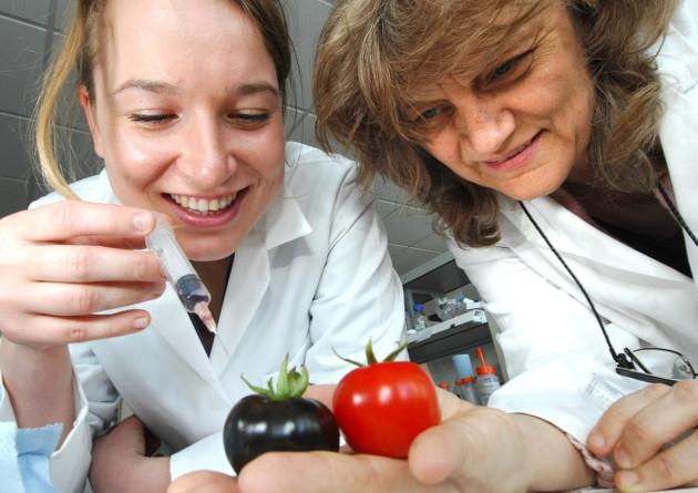 Profesorica Martin s John I (desno) nije nimalo zabrinuta štetnim posljedicama konzumacije GM plodova, a smatra da će ljudi prihvatiti koristi ljubičaste GM rajčice te da o mogućim štetama neće ni razmišljati.