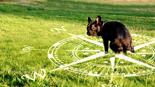 Otkriveno je da psi obavljaju nuždu poravnati s osi sjever - jug, no razlog zašto to čine još nije poznat.