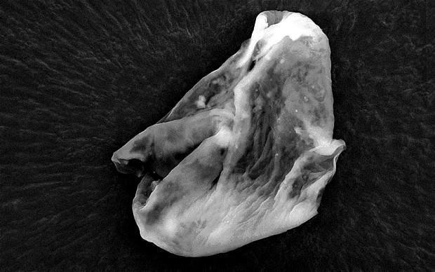 Još jedan neobičan mikroorganizam nepoznata podrijetla, uhvaćen na 27 kilometara visine.